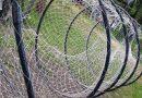 Cote mai mici pentru pescuitul comercial în Deltă