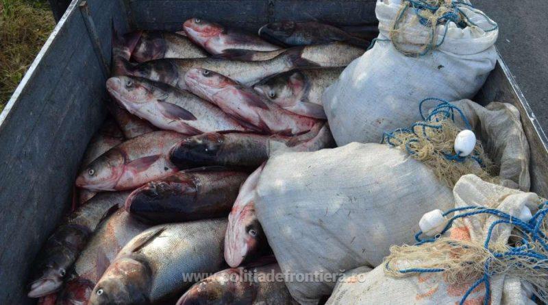 Pește confiscat la Enisala