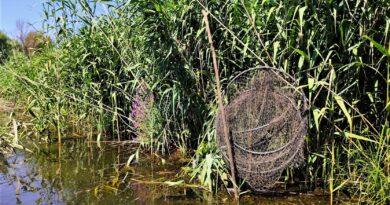 Proiectul de lege privind pescuitul a primit aviz negativ de la Consiliul Legislativ